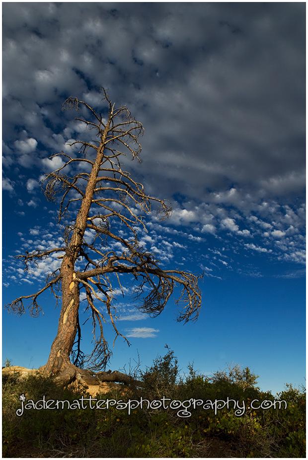 Tree072009